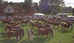 suffolk_horse_society_1.jpg